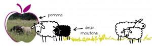 mouton-1024x313