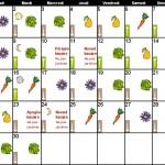 calendrier-lunaire-jardinage-juin2015-jardiner-avec-la-lune