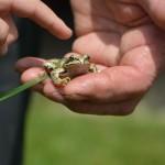 gite-ecolo-bebe-bretagne-famille-enfants-nature-grenouille-5708
