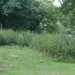 gite-ecolo-bebe-bretagne-famille-enfants-preau-jardin-assainissement-1010337q50