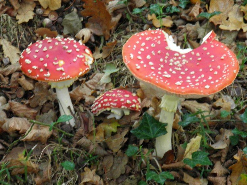 Des champignons mais pas seulement for Piscine bebe champignon