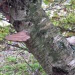 gite-ecolo-bebe-bretagne-lavilleheleuc-champignon-pb124553