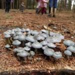 gite-ecolo-bebe-bretagne-lavilleheleuc-champignon-pb124605