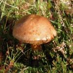 gite-ecolo-bebe-bretagne-lavilleheleuc-champignon-pb204732