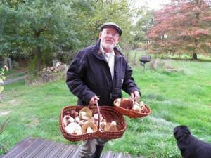 gite-ecolo-bebe-bretagne-lavilleheleuc-champignons-pa230919-fungoj