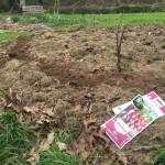 gite-ecolo-bebe-bretagne-lavilleheleuc-jardin-IMG_5389