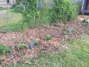 gite-ecolo-bebe-bretagne-lavilleheleuc-jardin-IMG_5447