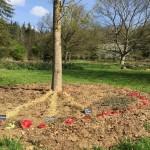 gite-ecolo-bebe-bretagne-lavilleheleuc-jardin-IMG_5519