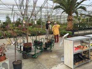 gite-ecolo-bebe-bretagne-lavilleheleuc-permaculture-achat-arbres-fruitiers-IMG_0697