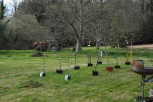 gite-ecolo-bebe-bretagne-lavilleheleuc-permaculture-arbres-fruitiers-DSC_1138