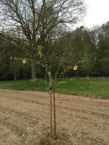 gite-ecolo-bebe-bretagne-lavilleheleuc-permaculture-arbres-fruitiers-IMG_0785