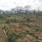 gite-ecolo-bebe-bretagne-lavilleheleuc-permaculture-patureeschenes-IMG_0542