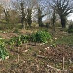 gite-ecolo-bebe-bretagne-lavilleheleuc-permaculture-patureeschenes-IMG_0558