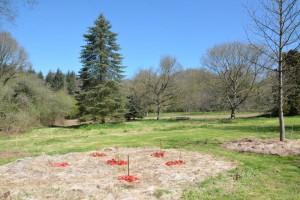 gite-ecolo-bebe-bretagne-lavilleheleuc-permaculture-yin-yang-jardin-verger-DSC_1153