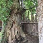 gite-ecolo-bebe-bretagne-lavilleheleuc-teste-pour-vous-jardins-broceliande-IMG_7939