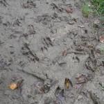 gite-ecolo-bebe-bretagne-lavilleheleuc-traces-pb204744