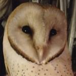 gite-ecolo-bebe-bretagne-nature-chouette-3875