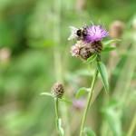 gite-ecolo-bretagne-nature-fleur-carre-055q50