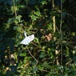 lavilleheleuc-gite-ecolo-bebe-bretagne-maison-fees-DSC_3737