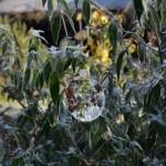 lavilleheleuc-gite-ecolo-bebe-bretagne-sculpture-glace-DSC_3695